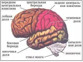 Brain Angioma